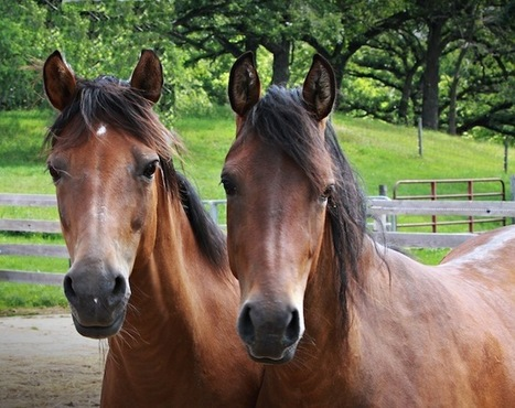 Illinois horses affected by EHV deaths, exposure; vet advises owners to lock-down stables, curtail travel, limit outside handling | The Jurga Report: Horse Health, Welfare, and Care | Scoop.it
