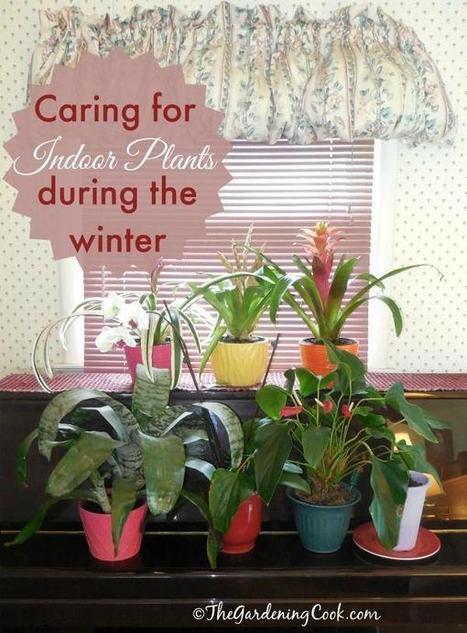 Tweet from @ImanNaim3   Garden Ideas by Team Pendley   Scoop.it