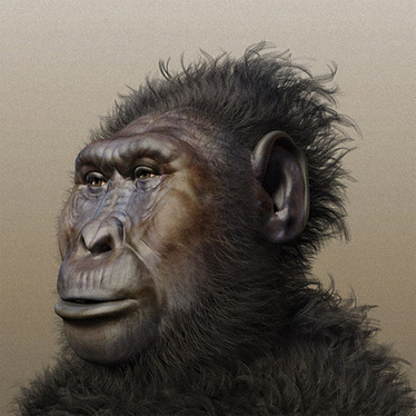 Utah research: Human face evolved to take a punch - Salt Lake Tribune | Science | Scoop.it