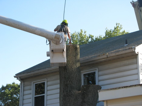 Servicing Diseased Trees - Desis Home Experts | homeproducts | Scoop.it