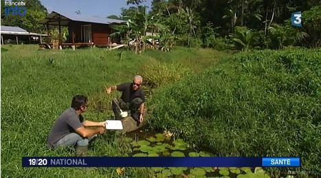 L'institut Pasteur se bat en Guyane contre le paludisme   EntomoScience   Scoop.it