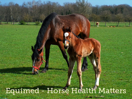 Equine Fitness and Physiology | all things horsey | Scoop.it