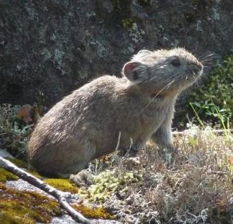Japan's Mammal Fauna | WildWatchJapan | Year 3 Science: Living things in Japan | Scoop.it
