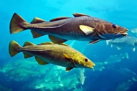L'Avenir | De quoi « parlent » les poissons ? | L'actualité de l'Université de Liège (ULg) | Scoop.it