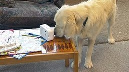 First dementia dogs start work | Sustain Our Earth | Scoop.it