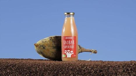 Une start-up montpelliéraine met le baobab en bouteille | Sélections de Rondement Carré sur                                                           la créativité,  l'innovation,                    l'accompagnement  du projet et du changement | Scoop.it