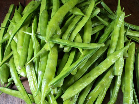 Health Benefits of Cluster Beans to Staying Healthy | Healthy Tips | Scoop.it