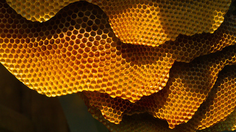 Why honey is the only food that doesn't go bad | Scratch Cooking | Scoop.it