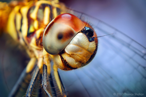 Macro Photos Reveal the Mystical World of Insects | omnia mea mecum fero | Scoop.it