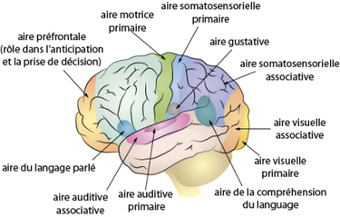 Les sourds sont-ils visuels? Un lien avec les intelligences multiples ? | Intelligences Multiples | Scoop.it