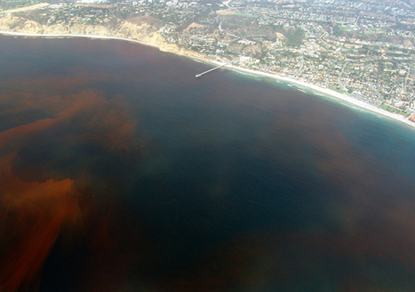Gulf of Mexico Dead Zone Now the Size of Connecticut | GarryRogers Biosphere News | Scoop.it