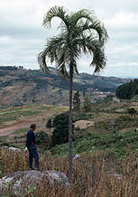 83% of Madagascar's palms near extinction - and 20,219 other species | The Wild Planet | Scoop.it