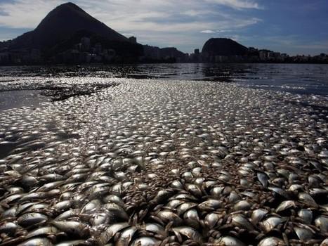Un tapis de poissons morts gâche la carte postale de Rio | Toxique, soyons vigilant ! | Scoop.it