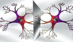 Las neuronas espejo en el Autismo y posibles terapias - | Recull diari | Scoop.it