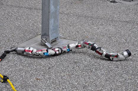 Un robot serpent qui ne lâche rien ! - Humanoides.fr | technologie 3ème | Scoop.it