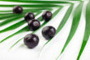 Açai reverses age-related cognitive decline in rat study | Longevity science | Scoop.it