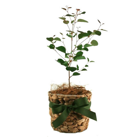 Buy Plants Online and Feel the Freshness In Them | Plants Online | Scoop.it