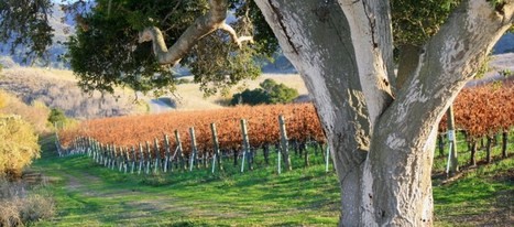 Plan Your Santa Ynez Valley Vacation | Travel | Scoop.it
