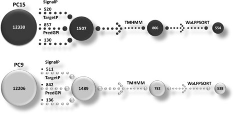 Comparative and transcriptional analysis of the predicted secretome in the lignocellulose-degrading basidiomycete fungus Pleurotus ostreatus | MycorWeb Plant-Microbe Interactions | Scoop.it