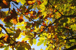 Woodland Highlights: November | Conservation & Environment | Scoop.it