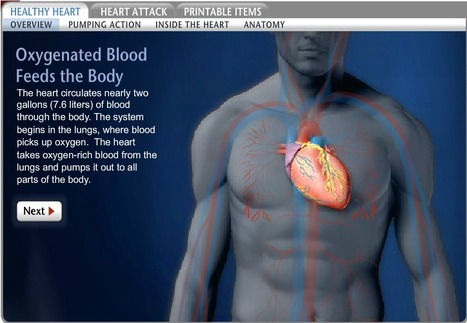 Heart, Heart Information, Cardiovascular Facts, News, Photos -- National Geographic | L6 Biology | Scoop.it