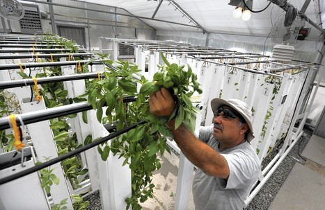 USA - Innovation is blooming at water-wise urban farms in California   Aquaponics in Action   Scoop.it