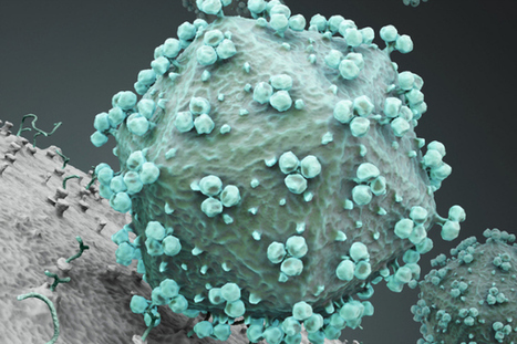 Scientists have pinpointed where HIV originated | Biotech and Beyond | Scoop.it