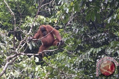 Indonesia promoting eco-tourism to protect rainforests | Fair, ethical and sustainable tourism | Scoop.it