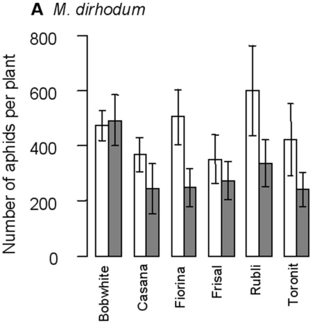 PLOS ONE: Indirect Effect of a Transgenic Wheat on Aphids through Enhanced Powdery Mildew Resistance (2012)   Plants and Microbes   Scoop.it