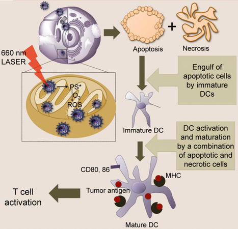 Nanoparticles reprogram immune cells to fight cancer   KurzweilAI   Longevity science   Scoop.it