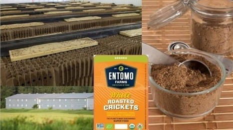 Entomo Farms rides the edible insects wave: 'Things really exploded for us in 2015' | Entomophagy: Edible Insects and the Future of Food | Scoop.it