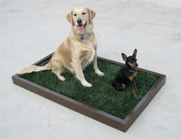 Affordable Dog Grass and Litter Boxes, Low-Cost Porch Potty Patch, Puppy Apartment Training, Indoor Park, Doggy and the City - Los Angeles, East LA, Malibu, Playa Vista, Marina Del Ray, San Fernand... | 5 Basic Things a Dog Needs | Scoop.it
