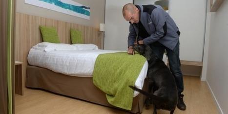 Le chien, le meilleur ennemi des punaises de lit | CaniCatNews-actualité | Scoop.it
