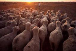 FAO :Réduire les émissions de gaz à effet de serre dues à l'élevage: c'est possible | Méthanisation Agricole, Collective, Territoriale | Scoop.it