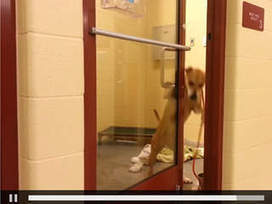 VIDEO: Dog opens door at Independence pet shelter - KSHB | It's a dog's life | Scoop.it
