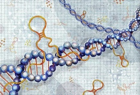 Rethinking RNA: Thousands of long noncoding RNAs are physically attached to DNA | Amazing Science | Scoop.it