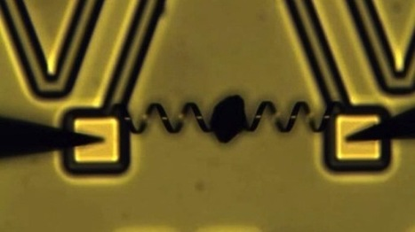 Scientists create robotic muscle that is 1,000 times more powerful than human muscles | Managing Technology and Talent for Learning & Innovation | Scoop.it