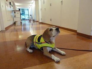 Cliff, el perro que huele infecciones intestinales | Algunas curiosidades | Scoop.it