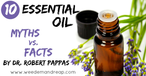 10 Essential Oil Myths vs. Facts by Dr. Robert Pappas | Good for your health | Scoop.it