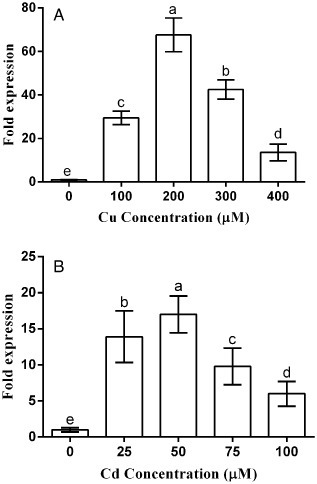 Metal induction of a Pisolithus albus metallothionein and its potential involvement in heavy metal tolerance during mycorrhizal symbiosis   MycorWeb Plant-Microbe Interactions   Scoop.it