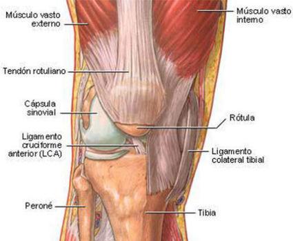 Artículo: Las lesiones de la rodilla y el pie en el ciclismo - EsCiclismo.com | btt mantenimiento | Scoop.it