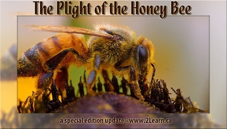 The Plight of the Honey Bee... Special Edition update @ 2Learn.ca | HCS Learning Commons Newsletter | Scoop.it