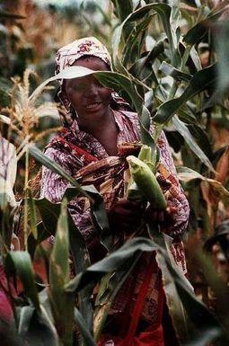Environ 345 000 paysans affectés par les conflits au Mozambique | Questions de développement ... | Scoop.it