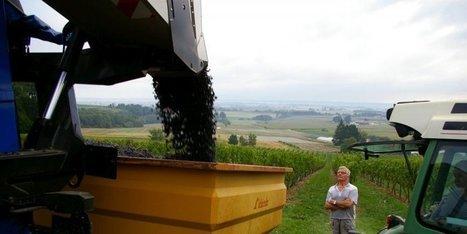La Cave de Sauternes Vigneron devient adhérente de la Cave du Marmandais | Le vin quotidien | Scoop.it