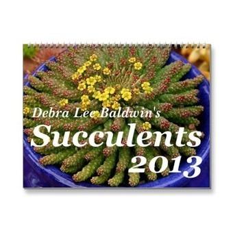 Debra Lee Baldwin's Succulents 2013 Calendar from Zazzle.com | Grown Green Gardens | Scoop.it