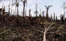Le pétrole fait des ravages dans le Delta du Niger   Actualités Afrique   Scoop.it