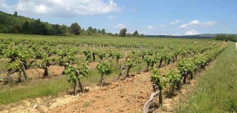 Retour sur les pique-niques des vignerons indépendants 2012 !   Tourisme viticole en France   Scoop.it