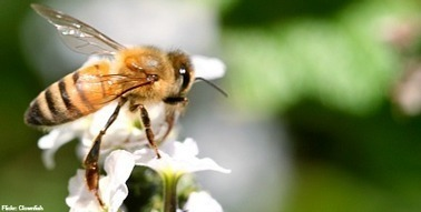 Bees, pesticides and the importance of the precautionary principle - The Information Daily | Gestión y competencias profesionales | Scoop.it