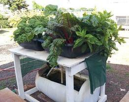 Synagro grant will help Malama Learning Center expand aquaponics education - Pacific Business News | Vertical Farm - Food Factory | Scoop.it
