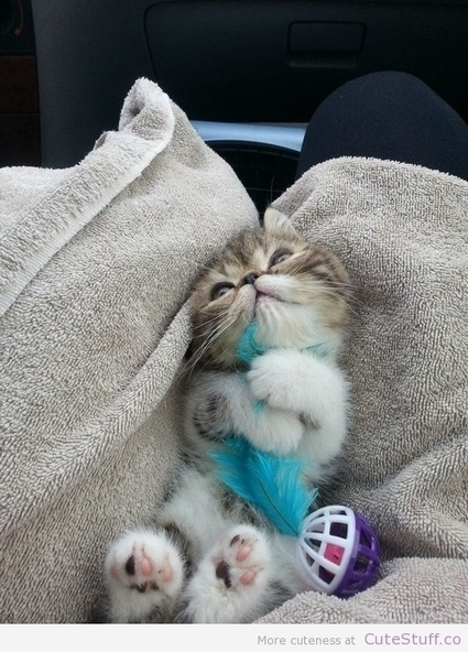 Kitten Loves Her Feather | CuteStuff.co - Cute Animals, Cute Pictures, Cute Videos and MORE! | Cat Caught In The Christmas Tree | Scoop.it
